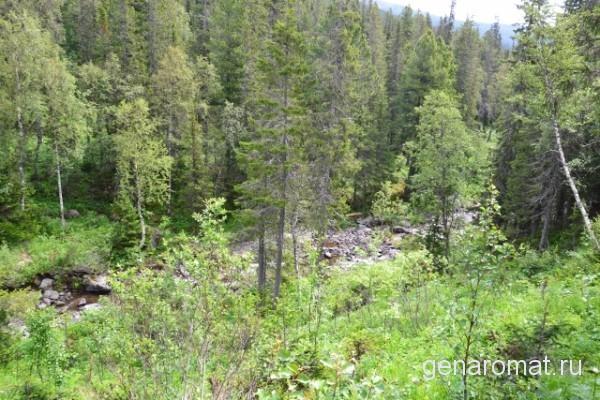 Внизу бежит река Конжаковка, лес остается там же.