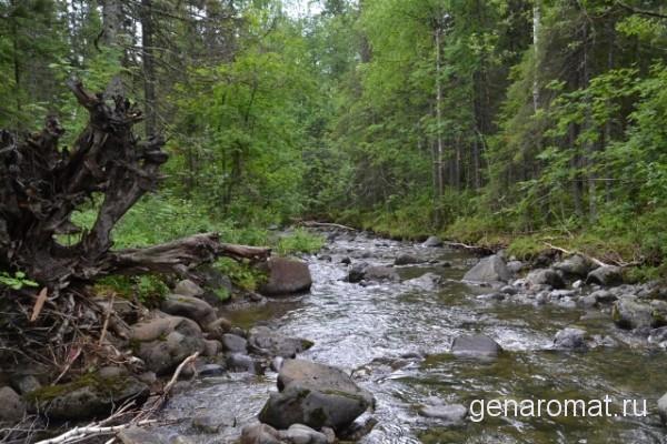 Таежный лес и горная река Конжаковка
