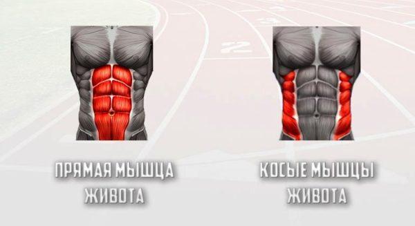 Прямые и косые мышцы живота