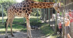 Скороговорка про зоопарк