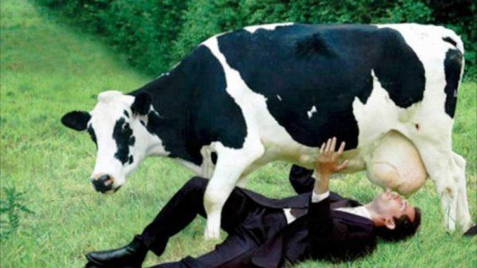 Почему нельзя пить молоко.