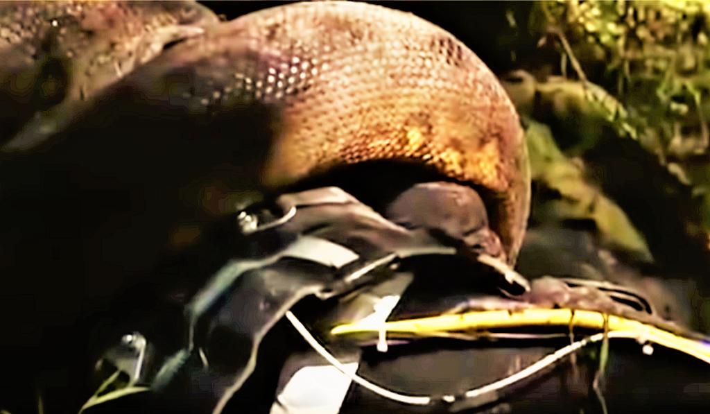 Анаконда съедает человека