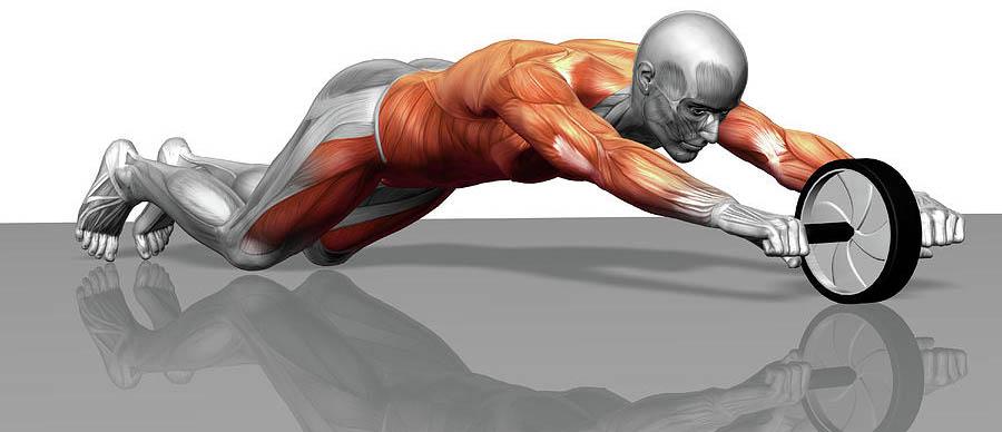 Гимнастический ролик. Какие мышцы работаютт.
